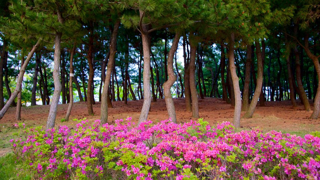 Busan featuring wildflowers and a park