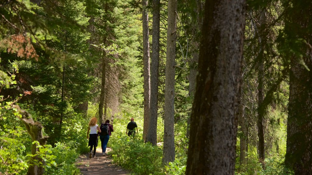 Jenny Lake showing hiking or walking and forests as well as a small group of people