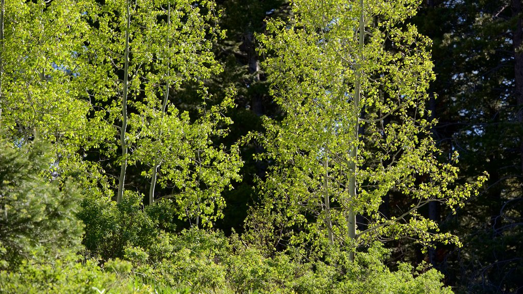 Grand Teton National Park featuring forest scenes
