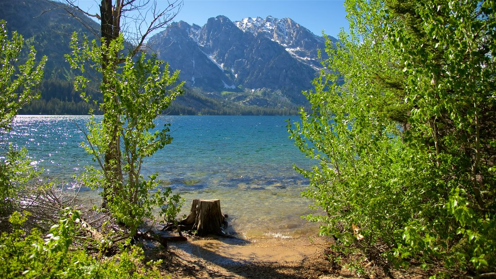 Jenny Lake featuring a lake or waterhole and mountains