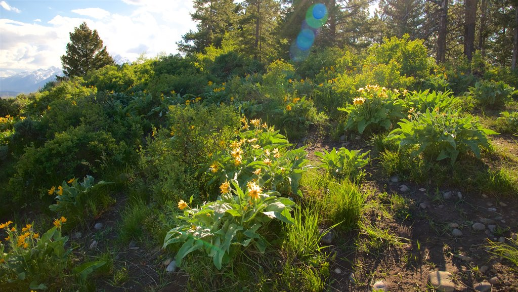 Grand Teton National Park showing a sunset and wildflowers