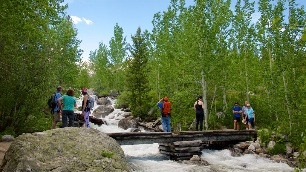 Grand Teton National Park which includes a bridge, a river or creek and rapids