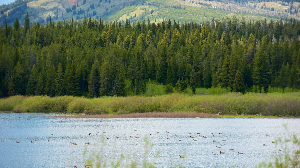 Jackson Lake featuring tranquil scenes, bird life and landscape views