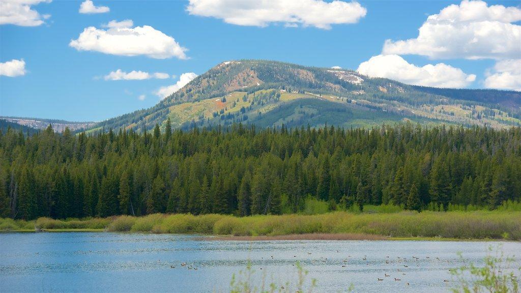 Jackson Lake which includes landscape views, wetlands and tranquil scenes