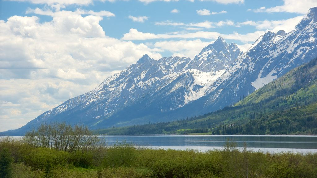 Jackson Lake showing mountains and a river or creek