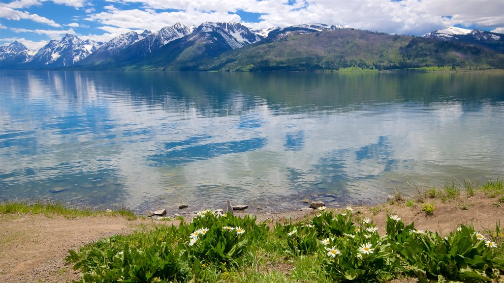 Jackson Lake showing wildflowers and a lake or waterhole