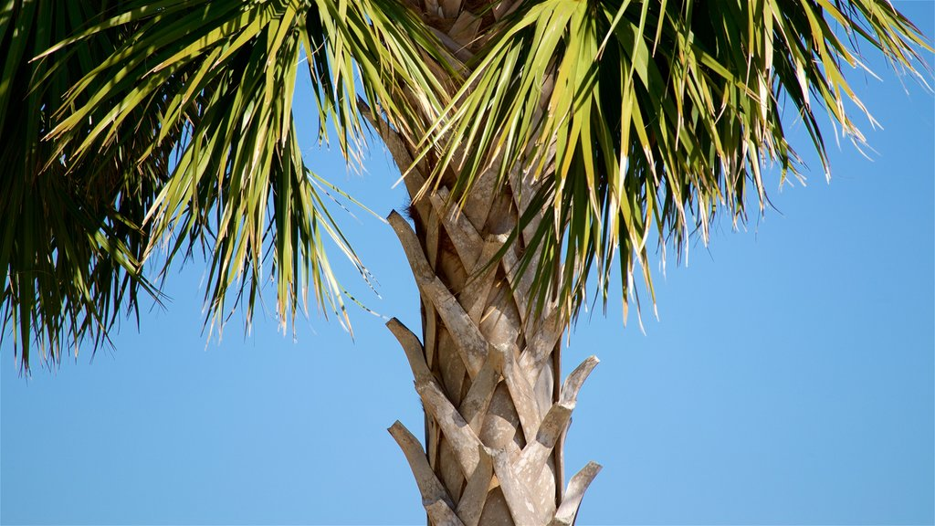 St. Simons Island featuring tropical scenes