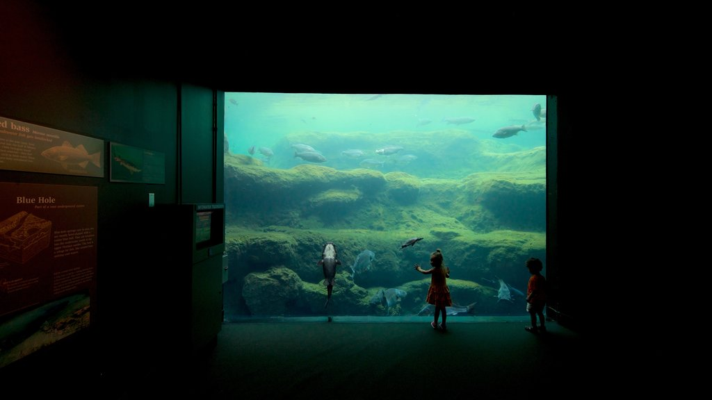 Flint RiverQuarium featuring marine life and interior views as well as children