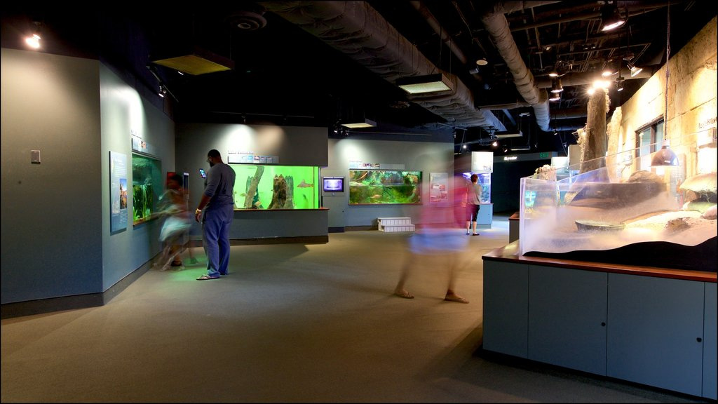Flint RiverQuarium showing marine life and interior views as well as a small group of people