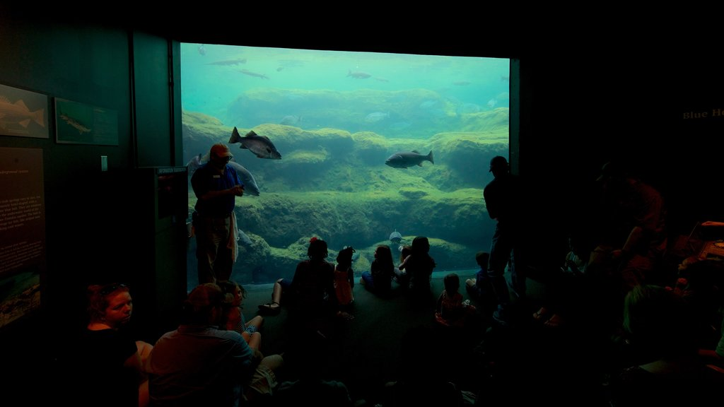 Flint RiverQuarium featuring marine life and interior views as well as a small group of people
