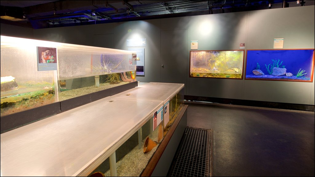 Flint RiverQuarium which includes interior views and marine life