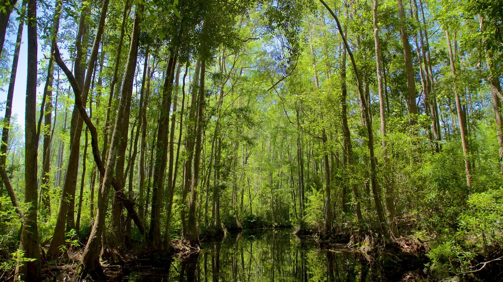 Okefenokee Swamp Park featuring a river or creek and forest scenes