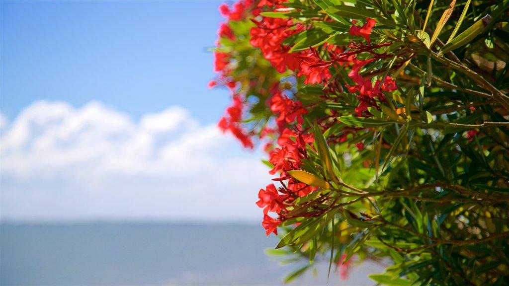 St. Simons Island Pier featuring wildflowers