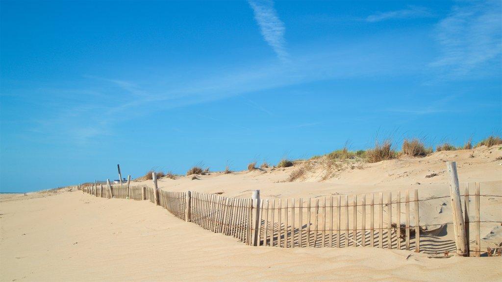 Fenwick Island State Park featuring a beach and general coastal views