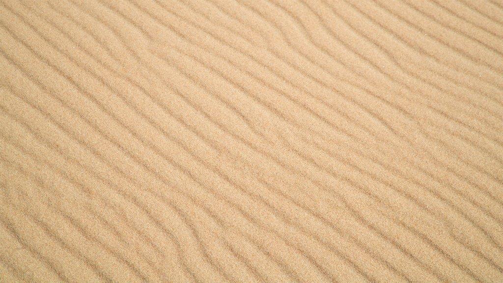 Fenwick Island State Park featuring a sandy beach