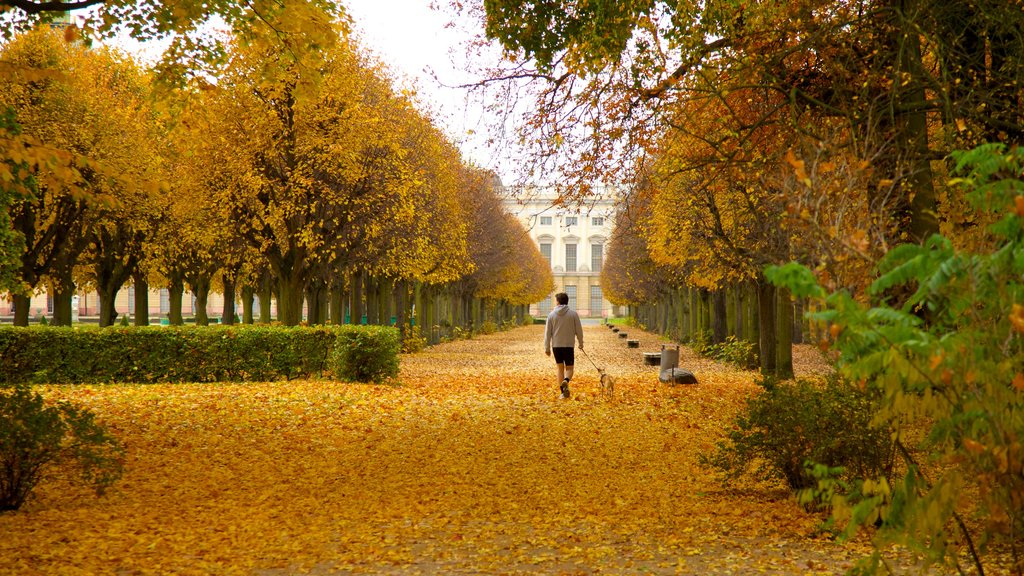 Schloss Charlottenburg featuring a park, a city and autumn leaves