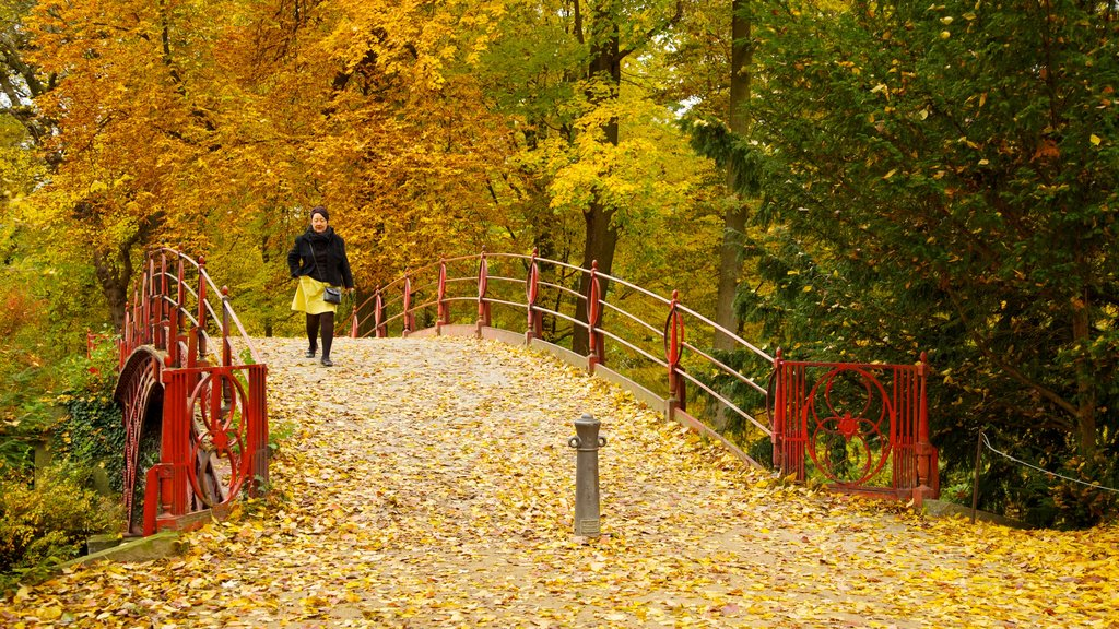 Schloss Charlottenburg showing hiking or walking, autumn leaves and a park