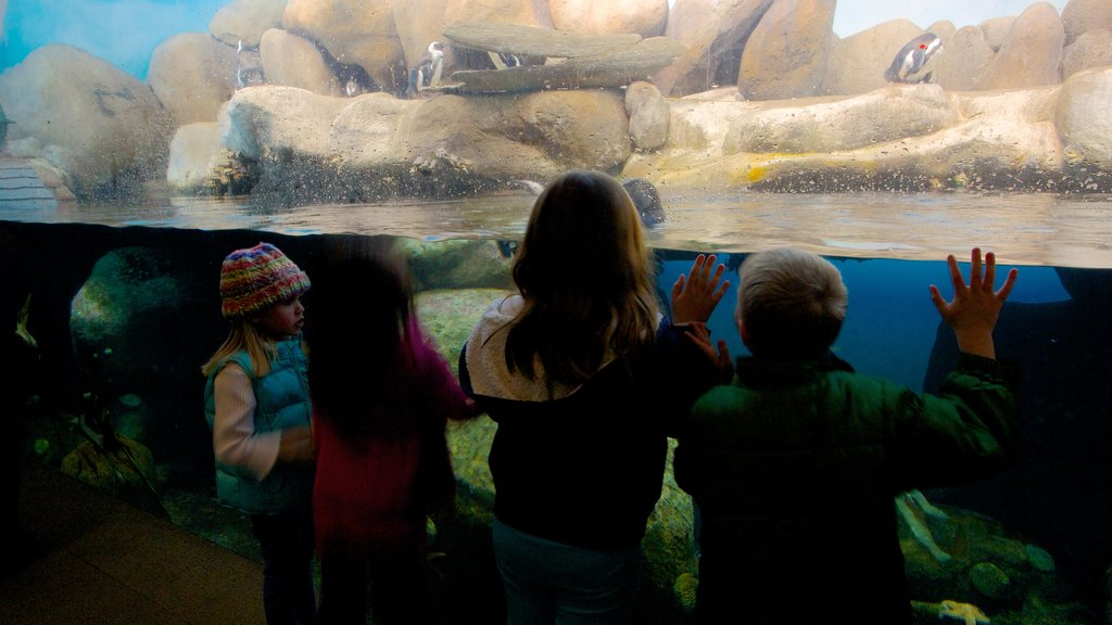 California Academy of Sciences featuring marine life and interior views as well as children