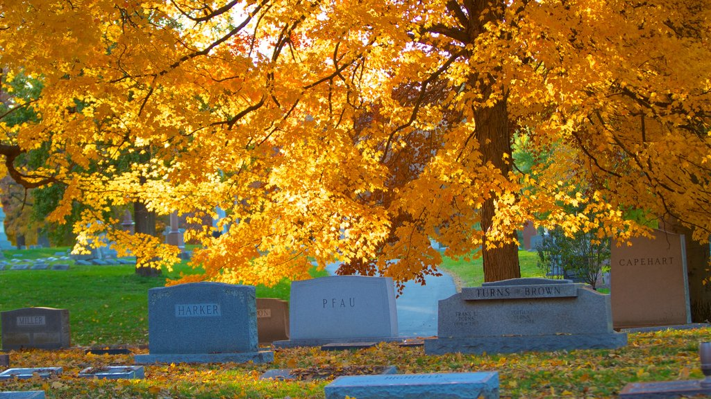 Indianapolis which includes fall colors and a cemetery
