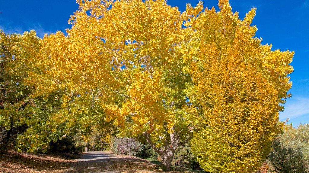 Reno featuring autumn leaves and a park