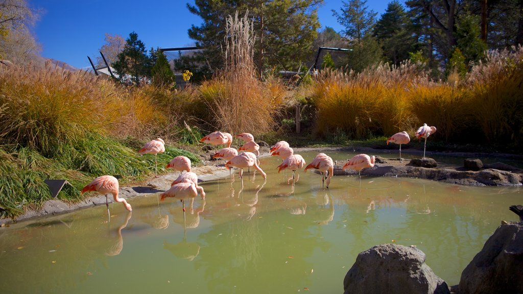Salt Lake City which includes bird life, a lake or waterhole and a pond