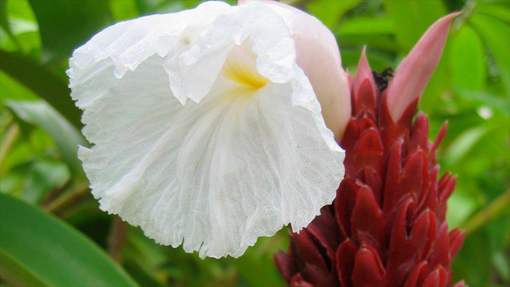 Costa Rica ofreciendo flores