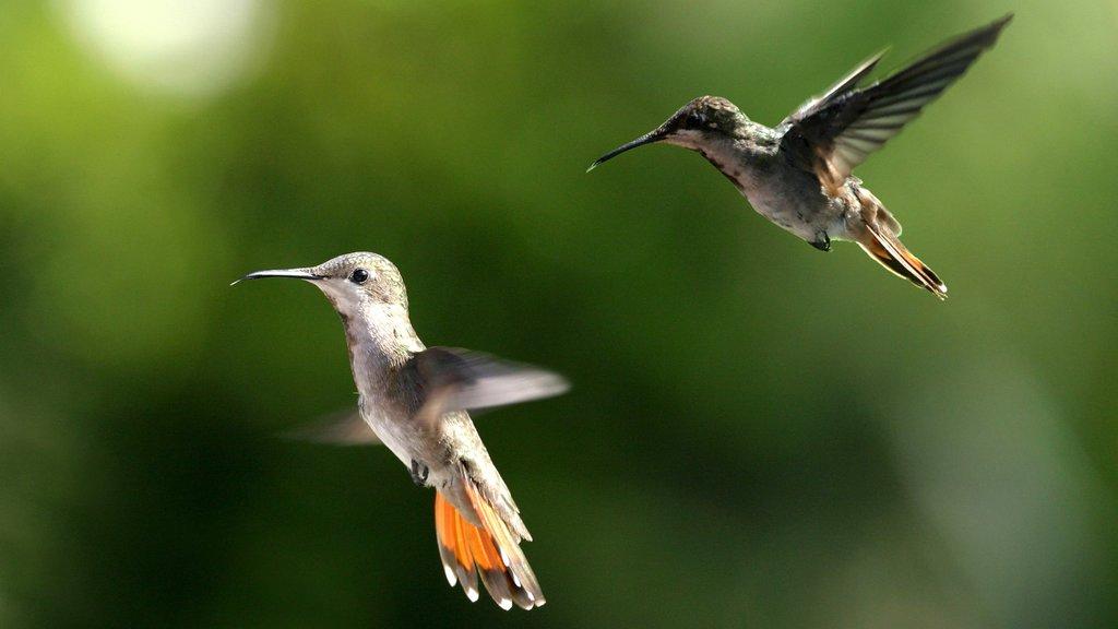 Trinidad showing bird life