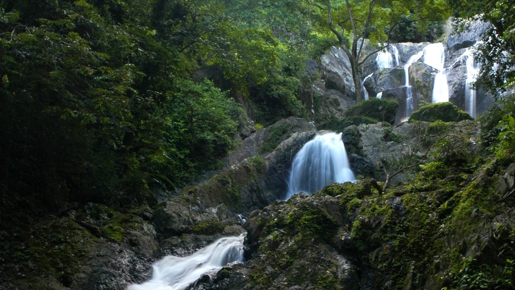 Trinidad which includes forest scenes and a cascade