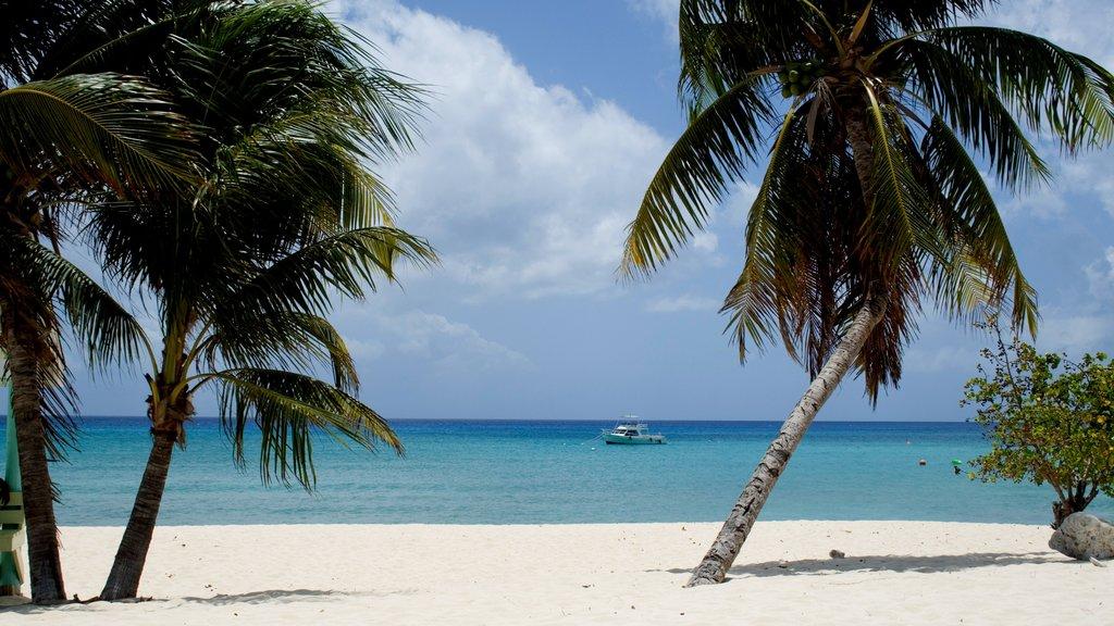 Islas Caimán que incluye vistas de paisajes, escenas tropicales y paseos en lancha