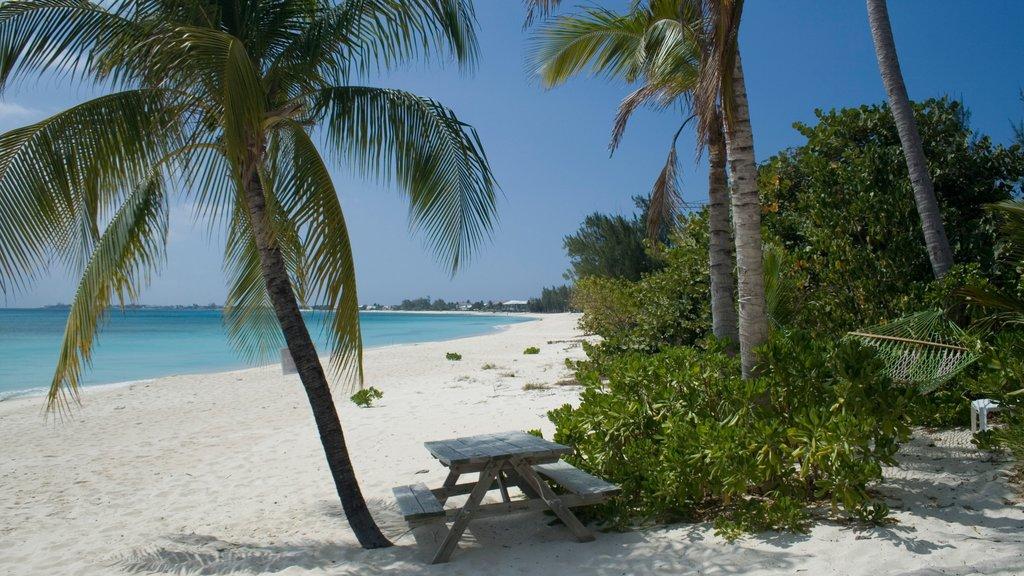 Islas Caimán que incluye una ciudad costera, una playa y escenas tropicales