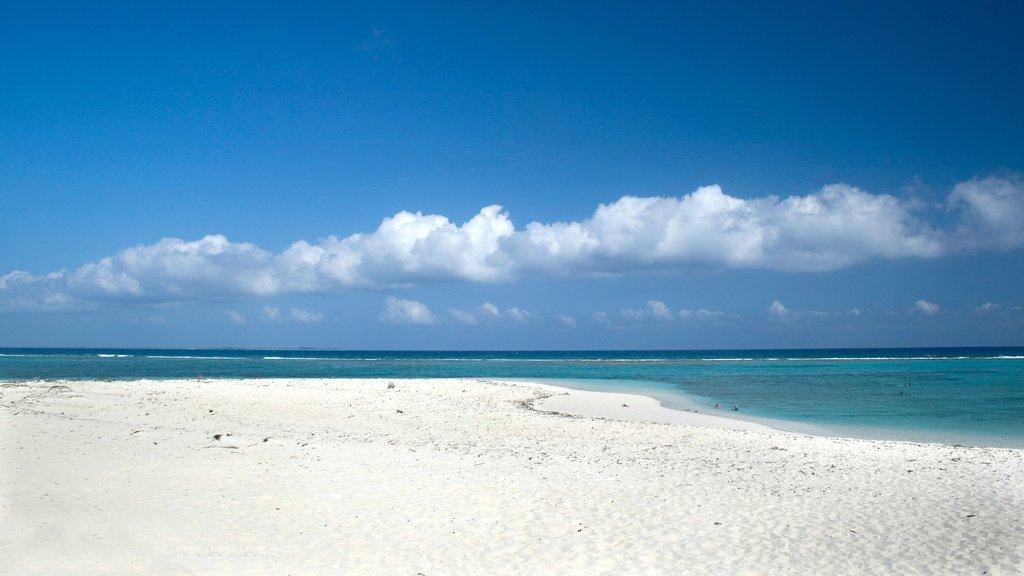 Islas Caimán ofreciendo vistas de paisajes, una playa y escenas tropicales
