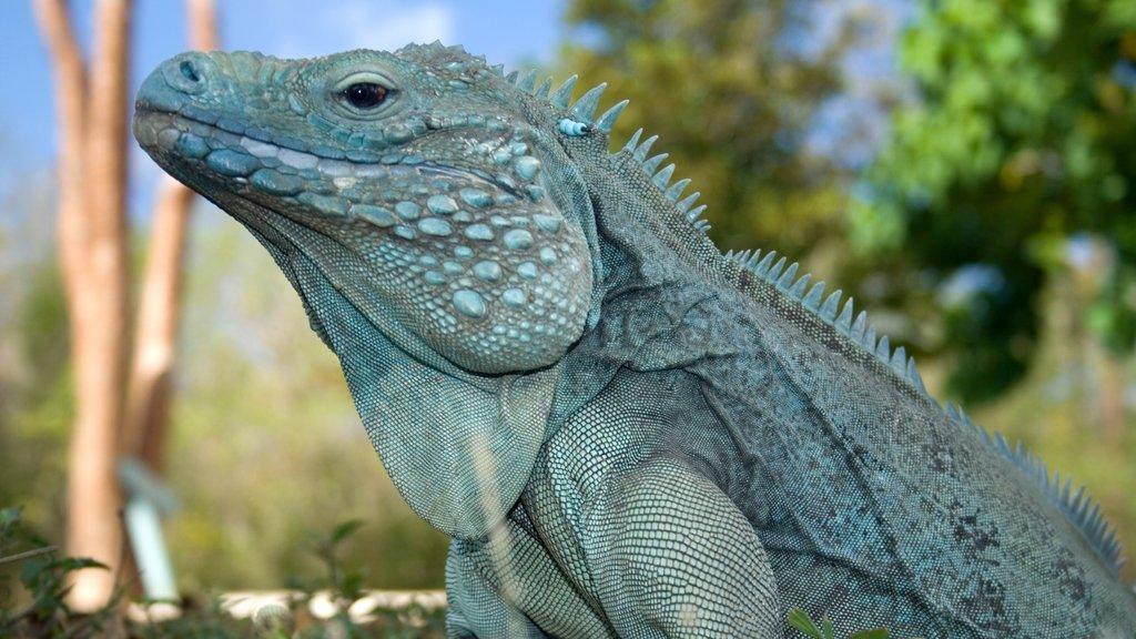 Islas Caimán ofreciendo animales