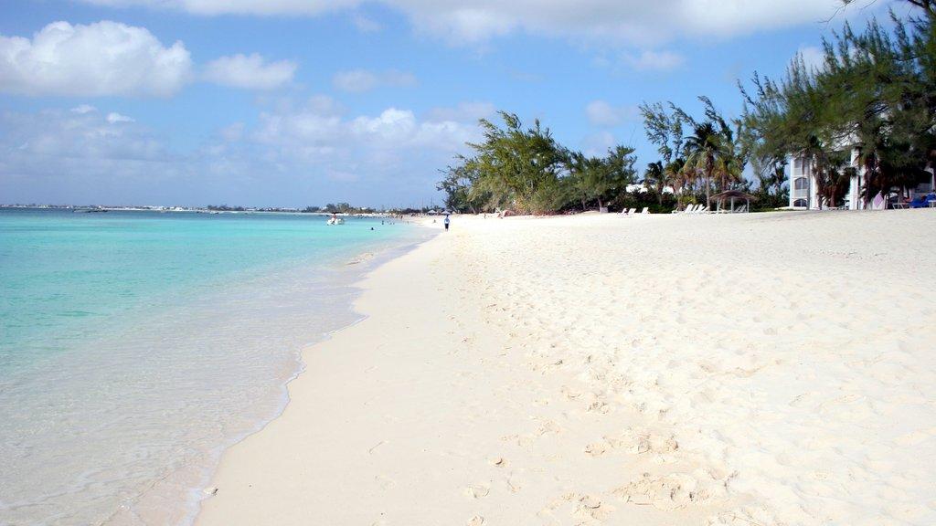 Islas Caimán que incluye vistas de paisajes, una playa y escenas tropicales
