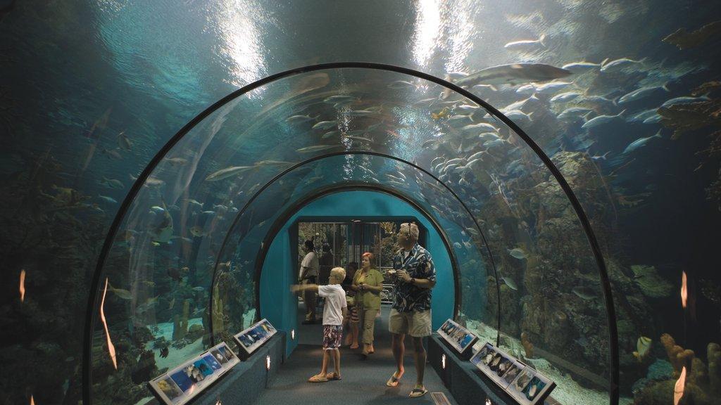 Galveston que incluye vida marina y vistas interiores y también una familia