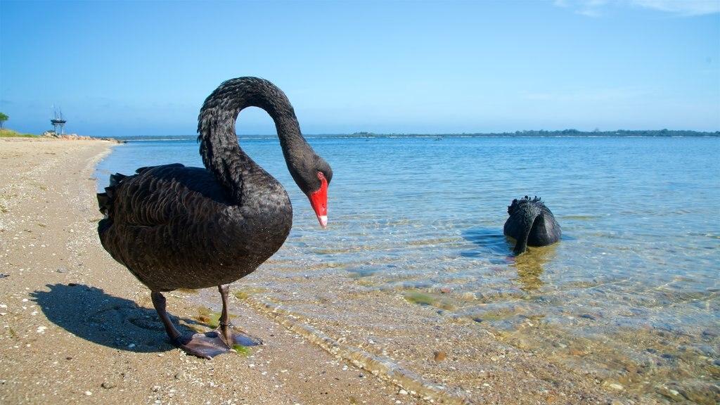 Victoria ofreciendo vida de las aves, vistas generales de la costa y una playa de arena