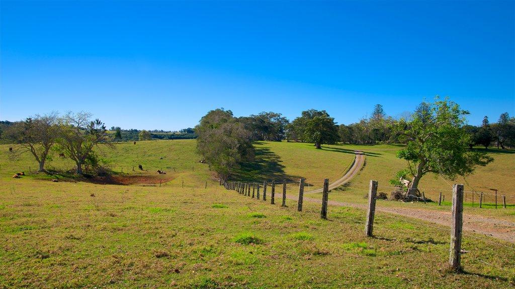 Sunshine Coast ofreciendo vistas de paisajes y tierras de cultivo