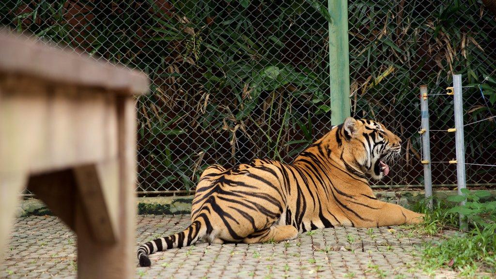 Phuket - Phang Nga showing dangerous animals and zoo animals