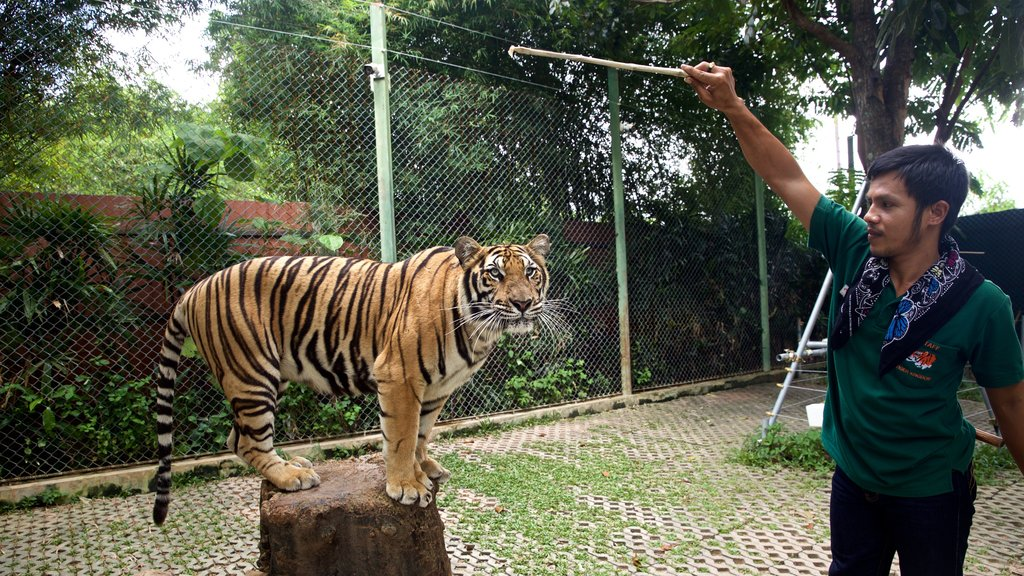 Phuket - Phang Nga featuring zoo animals and dangerous animals as well as an individual male