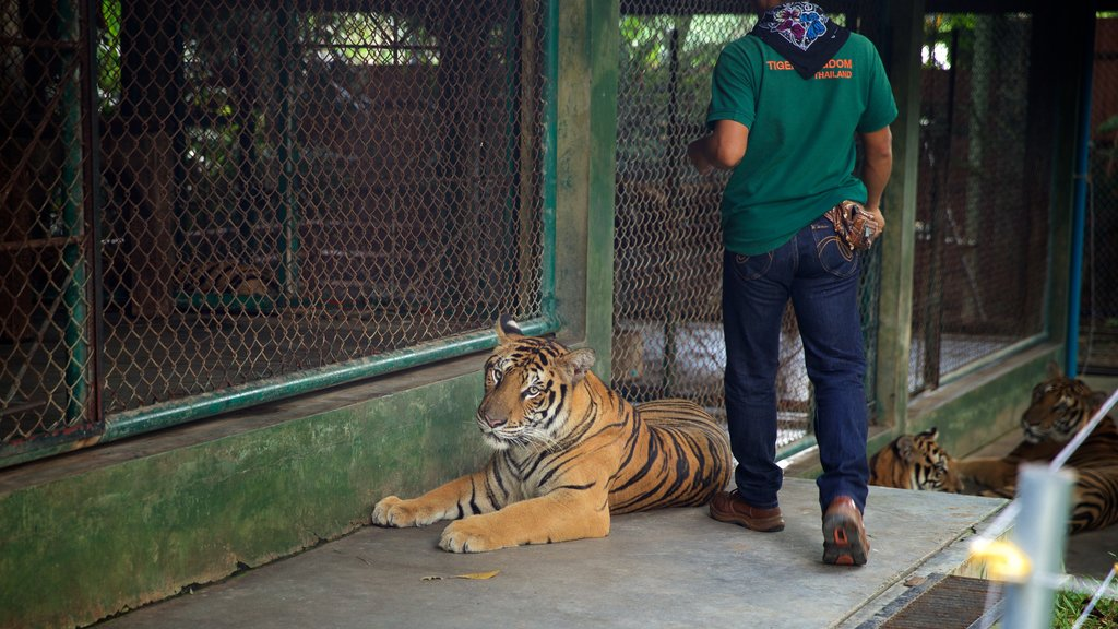 Phuket - Phang Nga which includes land animals, dangerous animals and zoo animals