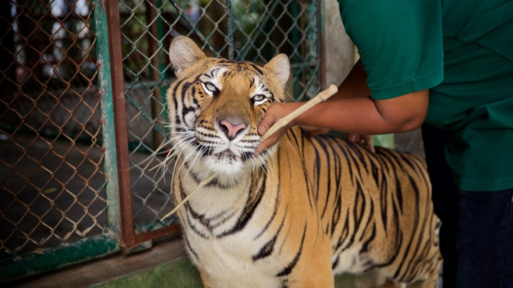 Phuket - Phang Nga which includes zoo animals, dangerous animals and land animals
