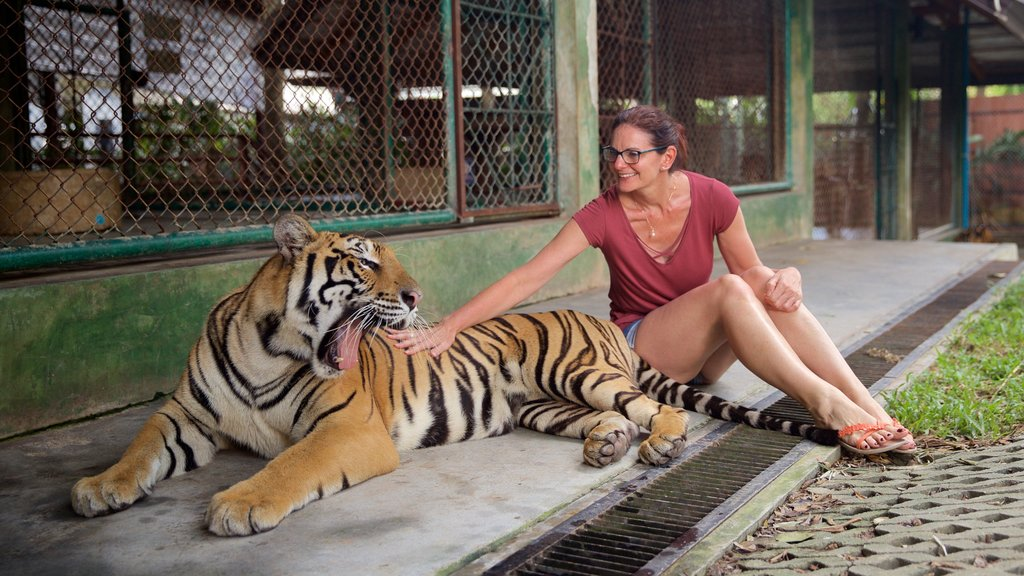 Phuket - Phang Nga showing zoo animals, land animals and dangerous animals