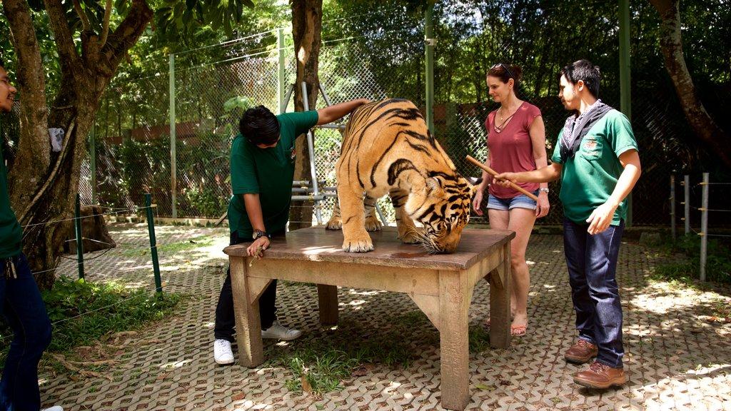 Phuket - Phang Nga featuring dangerous animals, zoo animals and land animals