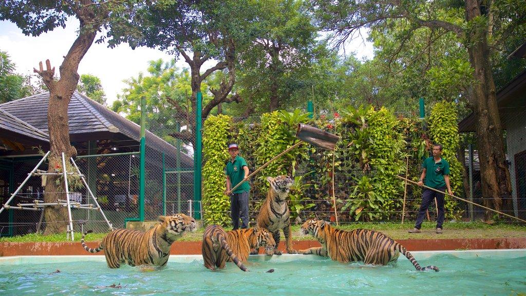 Phuket - Phang Nga showing land animals, dangerous animals and zoo animals