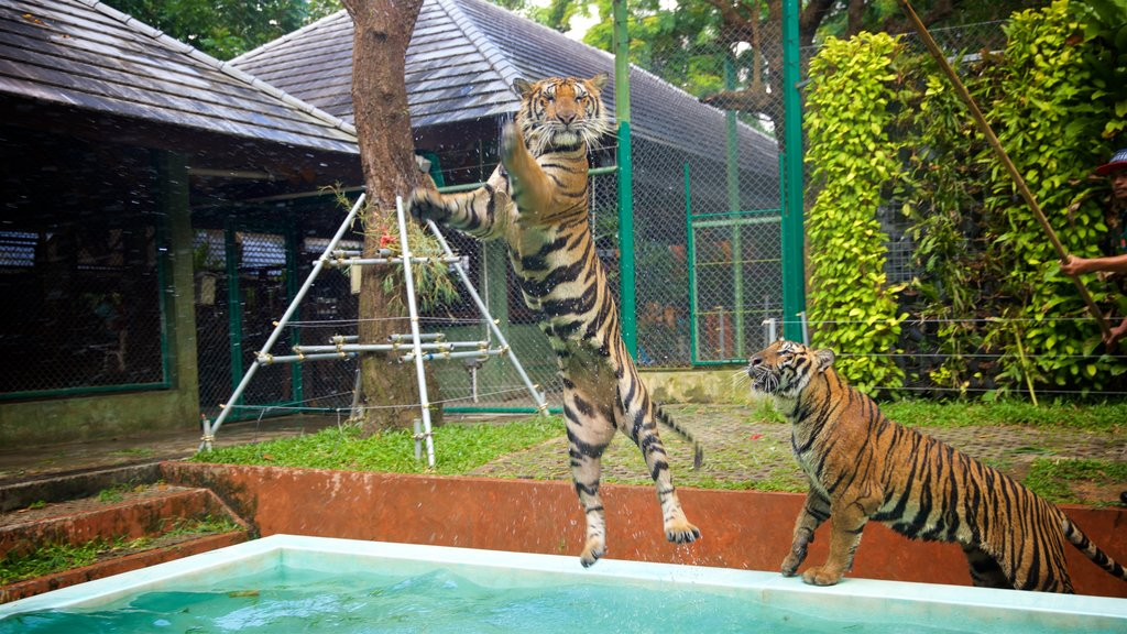 Phuket - Phang Nga which includes land animals, zoo animals and dangerous animals