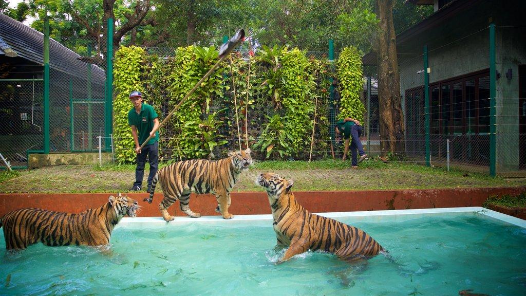 Phuket - Phang Nga showing dangerous animals, land animals and zoo animals