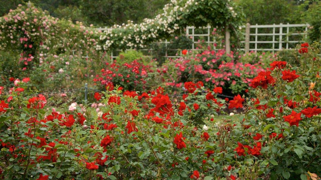 Brooklyn Botanic Gardens