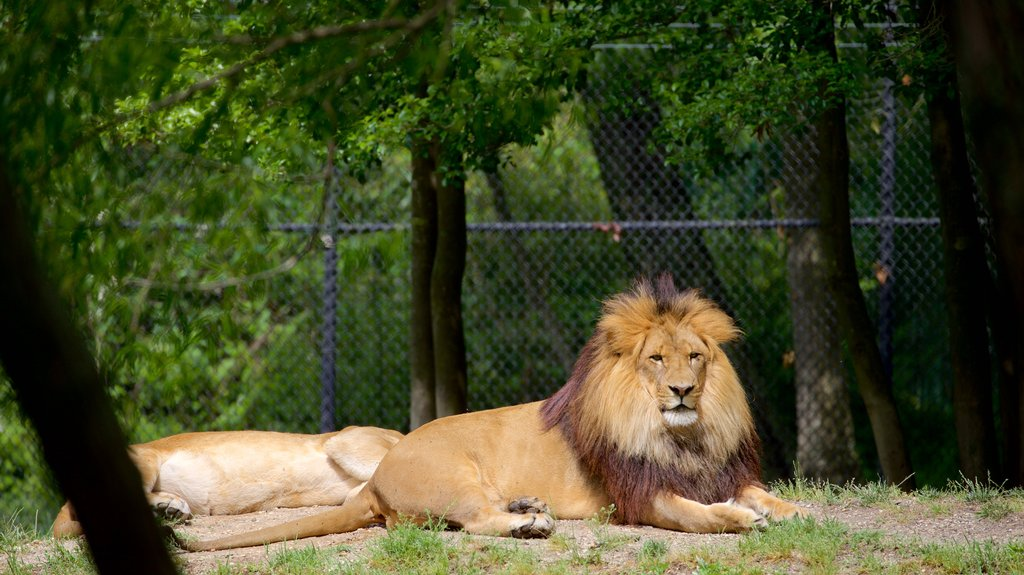 Cape May County Zoo showing land animals, dangerous animals and zoo animals