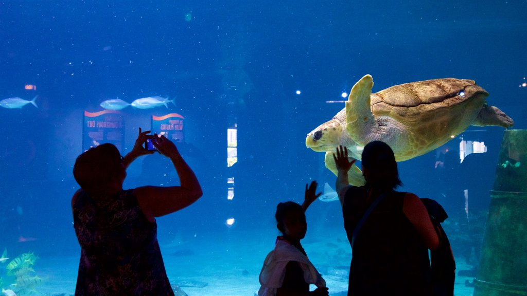 Adventure Aquarium featuring interior views and marine life as well as a family
