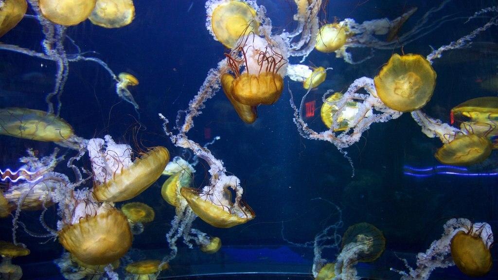 Adventure Aquarium which includes marine life