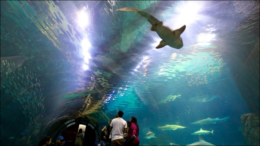 Adventure Aquarium showing marine life and interior views as well as a small group of people